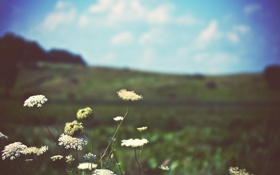 Обои поле, небо, природа, фото, растения, горизонт