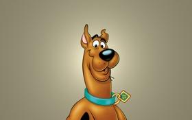 Обои собака, пес, ошейник, мордаха, Скуби-Ду, Scooby-Doo