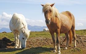 Обои кони, лошади, пастбище