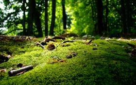 Картинка зелень, лес, деревья, мох