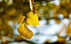 Картинка осень, лес, листья, природа, ветка, wallpapers