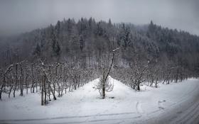 Картинка зима, дорога, пейзаж, сад