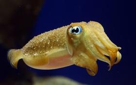 Обои море, макро, желтый, под водой, каракатица