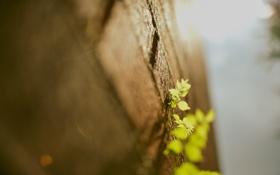 Обои растения, стена, листья, стены, макро