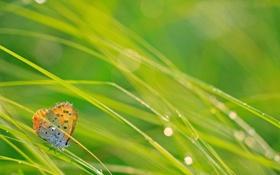Обои капли, бабочка, трава, блики, макро