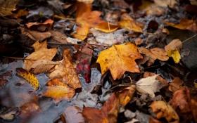 Картинка осень, листья, вода, отражение, увядание