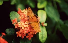 Обои цветок, листья, макро, цветы, лист, бабочка, растение