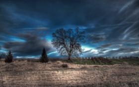 Картинка поле, пейзаж, ночь, дерево