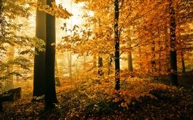 Картинка осень, лес, природа, листва