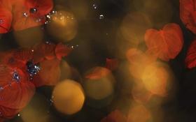 Обои листья, макро, свет, красные, вспышки, камушки