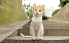 Картинка лето, взгляд, котенок, милый