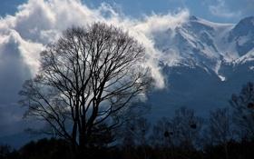 Картинка облака, снег, деревья, горы, дерево, вершины, силуэты