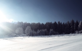 Обои зима, лес, солнце, свет, снег, деревья, елки