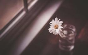 Картинка фон, окно, цветок