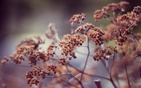 Обои растение, куст, plants