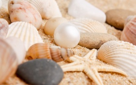Картинка песок, пляж, звезда, ракушки, камешки, жемчужина