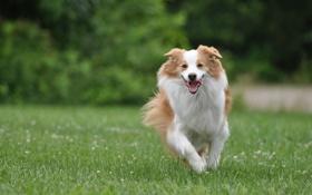 Обои радость, настроение, собака