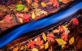 Обои ручей, камни, осень, листва, макро
