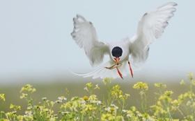 Обои цветы, птица, крылья, рыбка, полёт, добыча, улов