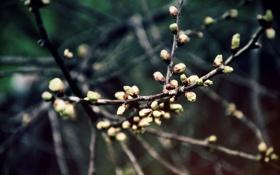 Картинка весна, почки, пробуждение