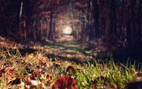 Картинка листья, лес, осень, трава, деревья, аллея, размытость