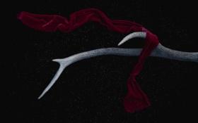 Обои фон, черный, ткань, рога