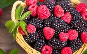 Обои ягоды, малина, корзина, ежевика