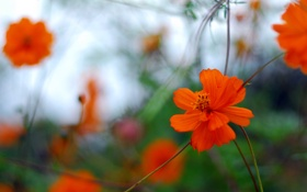 Картинка поле, цветок, лепестки, стебель, луг