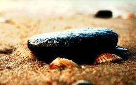 Обои песок, пляж, макро, галька, камни, ракушки, морская тематика