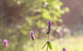 Обои цветок, лето, солнце, бабочка