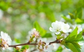 Картинка зелень, цветок, зеленый, дерево, ветка, весна