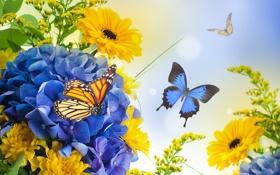 Обои бабочки, цветы, лепестки, бутоны, цветение, хризантемы, гортензия