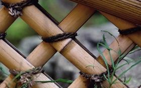 Обои сад, забор, бамбук