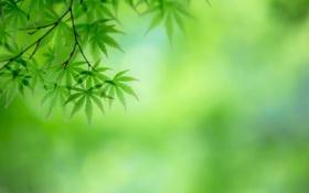 Обои листья, ветка, природа, дерево