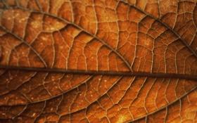 Обои осень, лист, Autumn