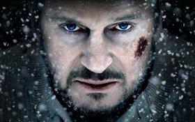 Обои взгляд, актер, Liam Neeson, The Grey, лиам нисон