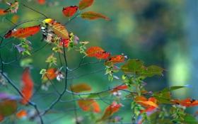 Обои осень, листья, макро, ветка