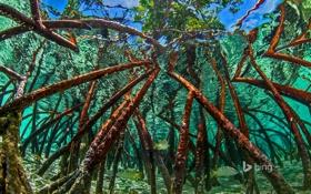 Картинка вода, деревья, Багамы, Staniel Cay, 6мангровые заросли, Экзумас