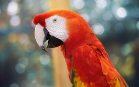 Обои перья, клюв, попугай, bird, parrot, разноцветный, color