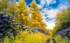Обои дорога, осень, лес, небо, облака, деревья, бревна