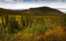 Обои США, лес, деревья, Alaska, горы, Denali