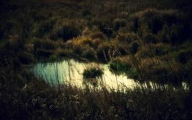 Обои природа, озеро, фото, фон, обои, растения