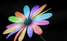 Обои цветок, макро, цвет