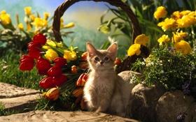 Обои кошка, кот, цветы, котенок, корзина, тюльпаны, cat