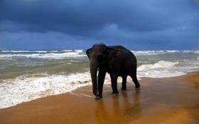 Картинка море, природа, слон