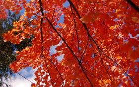 Обои осень, небо, листья, ветка, багрянец