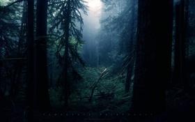 Картинка лес, темно, чаща, грег мартин, таинственно
