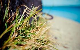 Обои желтый, небо, голубой, вода, Трава, песок, берег