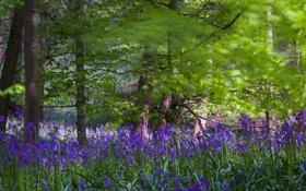 Картинка лес, трава, деревья, цветы