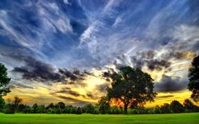 Обои природа, небо, облака, поле, деревья